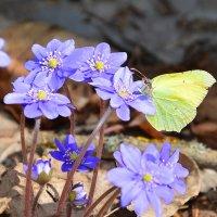 Первая весенняя бабочка :: Paparazzi