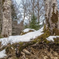 В заповедном лесу.. :: Юлия Бабитко