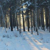 Зимний лес. :: Андрей