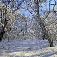 Зимний лес :: Михаил Баевский