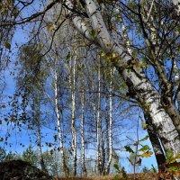 Осень :: АЛЕКСАНДР СУВОРОВ