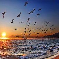 море и птицы :: viton