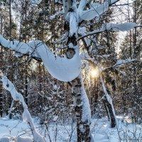 Солнце, снег, берёзы .... :: Андрей Дворников