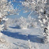 снег :: Лилия Дубчак