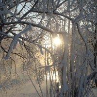 Зима :: Анжелика