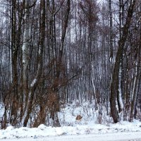 вдоль дороги :: Александр Прокудин