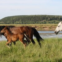 Вольные лошади :: Антонина