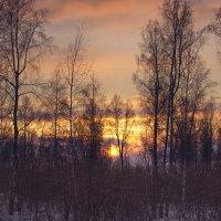 Утро в лесу. :: cfysx