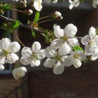 Когда весна придет.. :: Елена Семигина