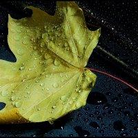 Мокрый  лист.... прилип  к  зонту. :: Валерия  Полещикова