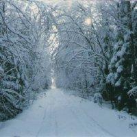 Дорога к Красным Лугам :: Виктор Мухин