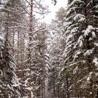 Зимний лес :: Asinka Photography
