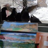 Российские голуби на распутье... в какие страны лететь? :: Алекс Аро Аро
