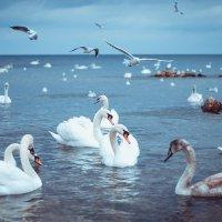 Белые птицы :: Алёна Жила