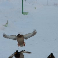 будеш знать как настрону летать... :: Игорь