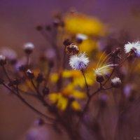 Осенние краски :: Виктория Воробьёва