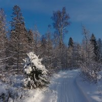 В зимнем лесу. :: Rabbit Photo