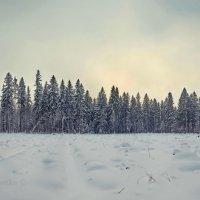 Тихий Зимний Вечер :: KotoPalych Gf