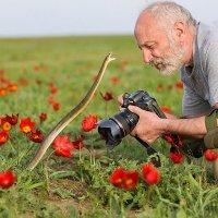 Берегись, фотограф :: Андрей Вигерчук