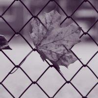 Когда уходит осень :: Владимир Марков