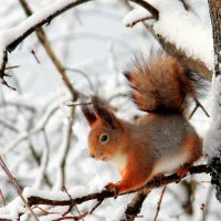 В зимнем лесу :: Вячеслав Минаев