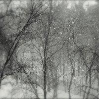 Снежный парк :: Надежда Бахолдина