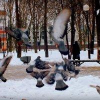 слет на кормежку :: Александр Прокудин