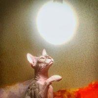 Котик и солнышко :: Андрей Зайцев