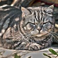 Лубочный кот :: Константин Огнев