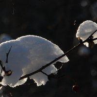 где-то на белом свете, там где всегда мороз... :: Ирина