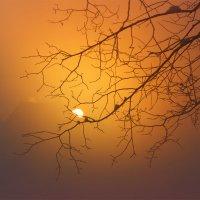 На закате :: Мария Кухта