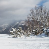 зимний пейзаж :: Наталья Литвинчук