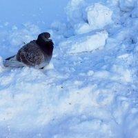 На снегу :: Лариса Корж-ая