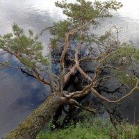 И в небе и в воде :: Mikhail Labut