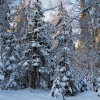 Таежная зима :: Татьяна Соловьева