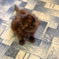 Котёнок Сонька :: Сергей Ткаченко