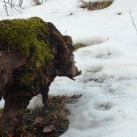 то ли буйвол, то ли бык, то ли тур... :: prokyl