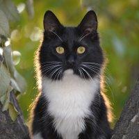 Кот ученый :: Елена