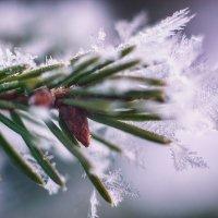 снежинки :: СергейТроицкий