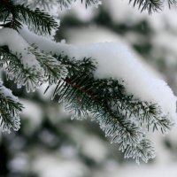 Зима. :: юрий