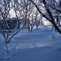 Экскурсия в Гадюкино зимой (20) :: Александр Резуненко