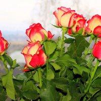 Розы на окне. :: Валентина ツ ღ✿ღ