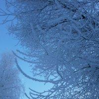 Зимние узоры... :: Алёна Савина