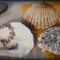 Воспоминание о море :: Яна Блэк