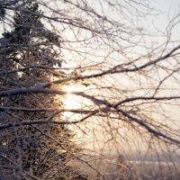 Зимнее солнце :: Анна Дорофеева