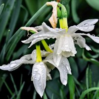 Весенний дождь 5 :: Galina