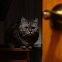 Задумчивый кот :: Роман Васенин