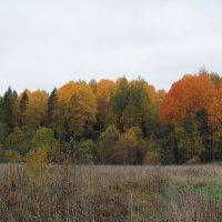 Осенние краски :: Mikhail Labut
