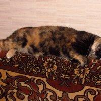 Спящая красавица :: Валерий A.