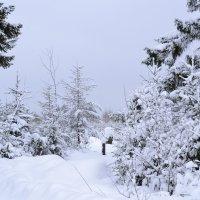 зимой на опушке :: petyxov петухов